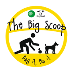big scoop dogs trust